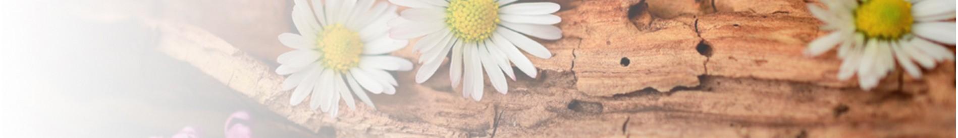 Cremas Ecológicas y Naturales para Hombres. Certificado BIO ✅